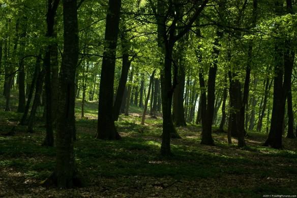 shady-forest